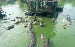 Rợn người cảnh du khách bất chấp an nguy chen chúc cho cá sấu ăn