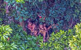Những hình ảnh về bộ lạc sống trong rừng rậm Amazon như tổ tiên của mình cách đây 20.000 năm