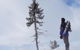 """Khám phá cây """"cổ thụ còi"""" hơn 9500 tuổi ở Thụy Điển"""