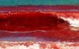 Thủy triều đỏ - Cơn ác mộng khiến ngư dân Hong Kong điêu đứng