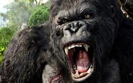 Đi tìm lời giải liệu King Kong có thật hay không?