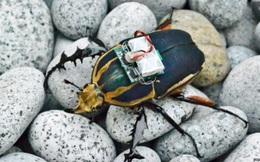 Kết hợp gián và thiết bị điện tử, các nhà khoa học tạo ra những con gián-máy có thể cứu mạng người