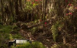 Nổi da gà với cảnh tượng ma quái trong công viên nổi tiếng bị bỏ hoang 15 năm