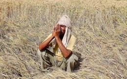 Chàng sinh viên hợp sức cùng giáo sư thử lòng nông dân và bài học thâm sâu đến ngỡ ngàng!