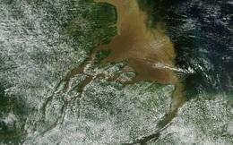Bất ngờ phát hiện dải san hô ngầm khổng lồ tại vùng Amazon
