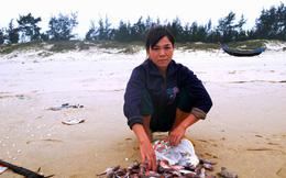 Vụ Formosa: Thành lập hội đồng đánh giá thiệt hại