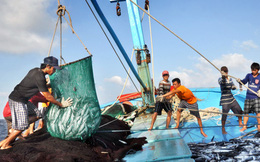 Việc cấm đánh bắt cá trên Biển Đông của Trung Quốc là vô giá trị