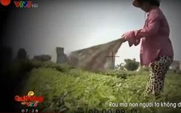 """VTV đình chỉ phóng viên thực hiện phóng sự """"cây chổi quét rau"""""""