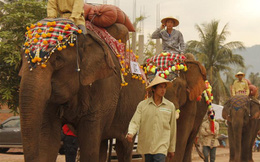 Bị Lào, Myanmar 'giật khách', DN dệt may Việt Nam có thể 'ngoi ngóp' chờ TPP?