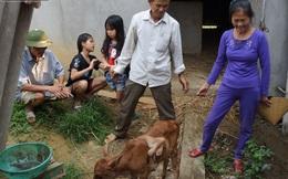 """Cả làng đổ xô đi xem bê """"quái vật"""" mọc """"cánh"""" trên lưng ở Nghệ An"""