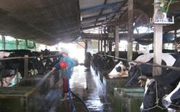 Ông Đinh La Thăng muốn giúp nông dân bán sữa, Vinamilk nói khó