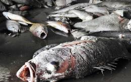 Chất độc nào có thể khiến cá chết hàng loạt từ Hà Tĩnh đến Huế?