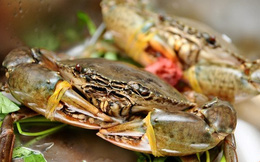 Cách phân biệt cua lành, cua độc bạn nên dắt lưng khi ăn hải sản