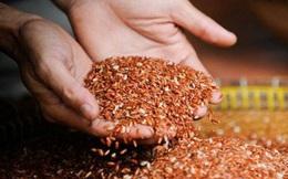 Bỏ viện về ăn gạo lứt để chữa bệnh: Bác sĩ khuyến cáo đối tượng nên sử dụng
