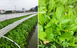 Tướng Rinh: Bà con tôi ở quê cũng trồng 2 luống rau, tôi góp ý mà không được