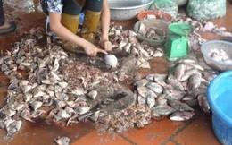 Bác sĩ Việt kiều choáng váng với thực phẩm bẩn và sự thờ ơ của một số bác sĩ