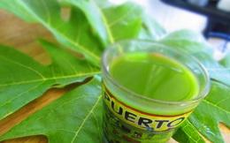 Thực hư chuyện chữa khỏi bệnh ung thư bằng uống nước lá đu đủ