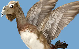 """""""Lạc đà là loài chim lớn nhất thế giới"""": Cũng có sự liên quan nhẹ"""