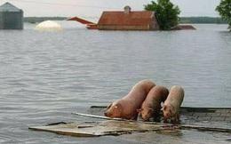 Nước phủ trắng miền Trung, 9 người chết và mất tích