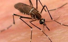 Muỗi truyền bệnh nguy hiểm nhưng tại sao chúng ta không được phép tận diệt loài này?