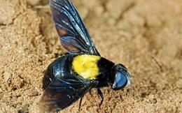 Giới khoa học cãi nhau nảy lửa chỉ vì một con ruồi xinh đẹp