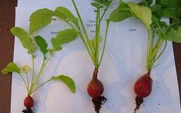 Tin vui: Con người hoàn toàn có thể ăn rau trồng trên sao Hỏa