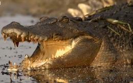 [Video] Người đàn ông này có sở thích bơi giữa bầy cá sấu