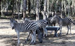 Sự thật về tin đồn hàng ngàn động vật chết ở Vinpearl Safari