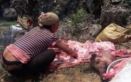 Hàng chục con lợn chết bị đổ xuống đường: Không có chuyện đem bán