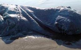 Con thủy quái kỳ lạ trôi dạt trên bờ biển Mexico