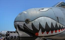"""Máy bay hỗ trợ bộ binh A-10 """"lợn lòi"""" vẫn chưa tìm được kẻ kế nghiệp"""