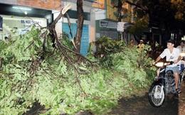Mưa lốc kéo đổ hàng loạt cây xanh ở Tân Bình
