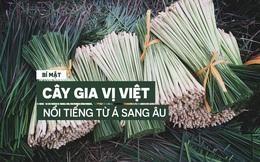"""Bí mật về 1 """"kho báu"""" luôn sẵn trong bếp của người Việt, nổi tiếng khắp từ Á sang Âu"""