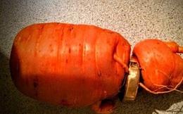 Lão nông đào trúng củ cà rốt mọc xuyên qua… nhẫn cưới của chính mình