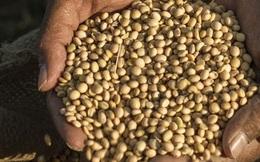 Tin mừng: Tỉ lệ đói toàn cầu đang giảm xuống mức thấp nhất từ trước đến nay