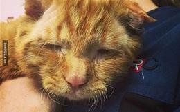 """Rơi nước mắt với câu chuyện của """"chú mèo buồn nhất thế giới"""""""