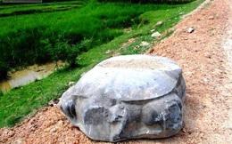 Vô tình nhặt được rùa đá cổ nặng nửa tấn... trên đường làng