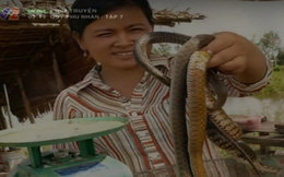 [VIDEO] Giật mình thon thót khi xem cảnh săn rắn ban đêm ở miền Tây