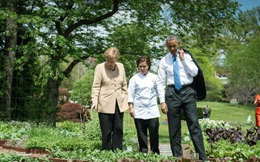 """Loại cây được ví là """"sâm nam"""" của VN có trong vườn nhà Obama"""