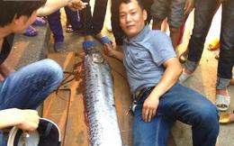 """Người dân đổ xô đến xem """"thủy quái"""" dài gần 4m còn sống ở Nghệ An"""