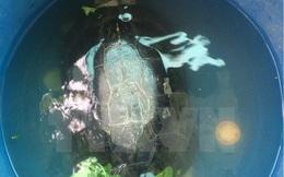 Gia chủ quyết không bán rùa với giá 50 triệu đồng mà mang đi thả