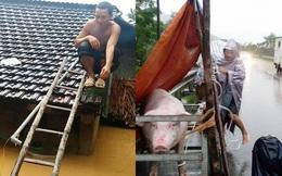 [ẢNH] Người dân nhốt heo trên đường, leo lên nóc nhà tránh lũ dữ