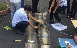 Hơn 3 tạ da trăn nhập lậu qua sân bay Tân Sơn Nhất?