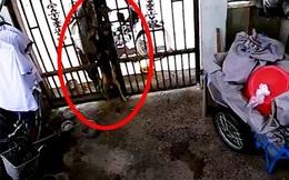 Phẫn nộ cảnh đánh bả, trộm chó giữa ban ngày