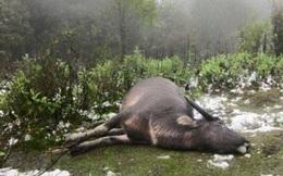 Lào Cai: Lần đầu tiên 52 xã bị băng tuyết che phủ