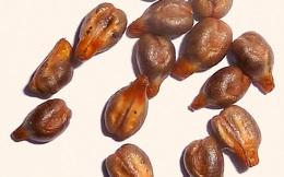 Công dụng của hạt nho