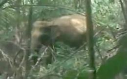 Đàn voi rừng liên tục xuống phá vườn, người dân đốt lửa xua đuổi