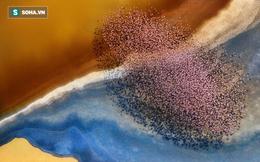 Bộ ảnh tuyệt vời của National Geographic: Khi thế giới hoang dã hóa mình thành kiệt tác