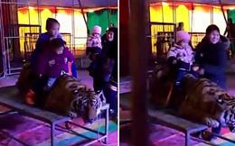 Đè đầu, trói chân, bắt hổ nằm im để du khách vui vẻ trải nghiệm cảm giác cưỡi lưng hổ