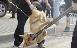 Sau sự cố chết người, cả thị trấn lùng sục tiêu diệt, cấm toàn bộ dân chúng nuôi chó